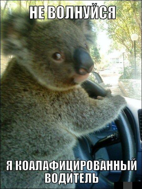 Коалафицированный водитель