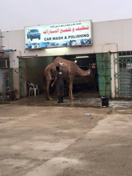 Мойка машин в арабских странах