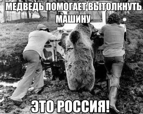 podborka_10_21 Медведь толкает машину